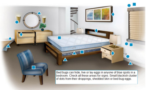 Where do Bed Bugs live